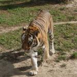 Zamość Zoo