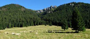 dolina-chocholowksa