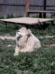 zoo-wojciechow
